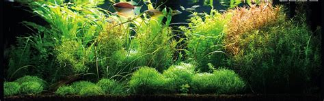 vasche per acquari marini acquari varese ticino iperanimal