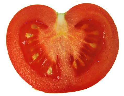 file tomato cut vertical png wikimedia commons