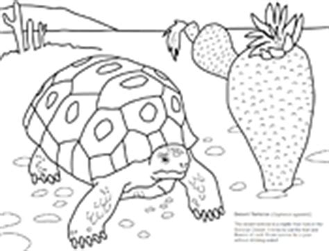 desert turtle coloring page desert lifr colouring pages