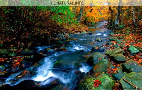 By Nature nature screensavers wallpapers