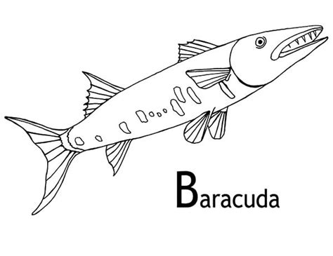 barracuda fish coloring page b is for barracuda fish coloring pages best place to color
