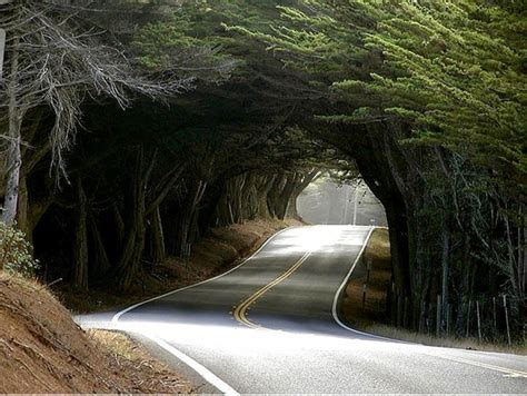 Wisteria Tunnels Tokyo by Incredibly Fascinating Tree Tunnels You Definitely Need To
