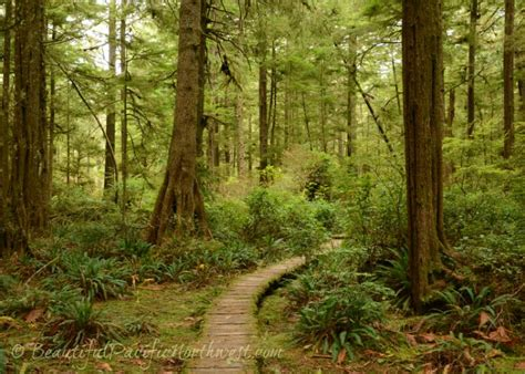 woodland forest plants and trees temperate deciduous forest plants and trees