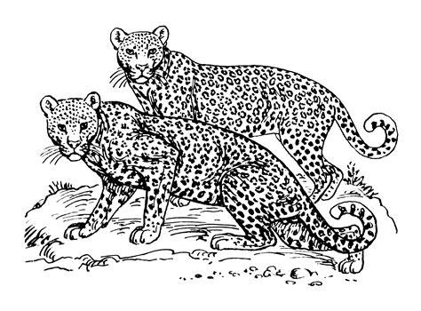 jaguar cat coloring page free coloring pages of cartoon jaguar