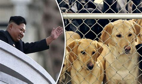 un dogs korean dictator jong un opened a zoo pavilion for dogs nature news