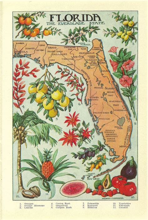 agricultural map of florida 1912 vintage florida illustrated map colorful and lovely