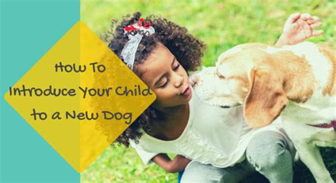 how to introduce your dog to a new house how to introduce your child to a new dog