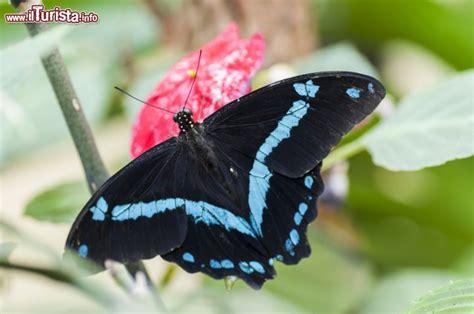 casa delle farfalle montegrotto una farfalla esotica al butterfly arc di montegrotto