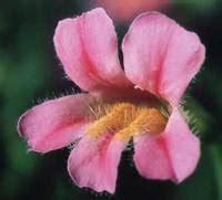 fiori californiani elenco fiori californiani le essenze p q pollicegreen