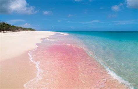 beaches with pink sand top 10 wonderful pink beaches in the world t10 info