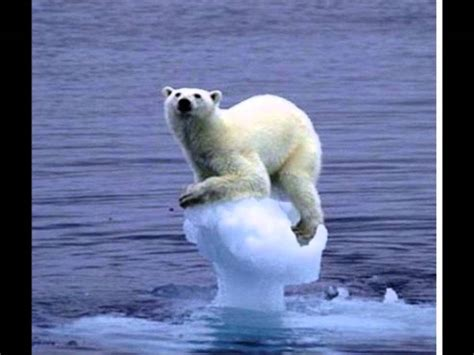 imagenes animales polares osos polares en peligro de extinci 243 n y koalas by agusss