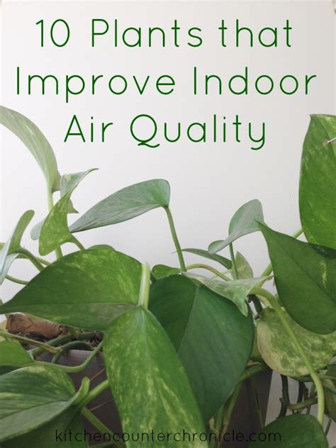 best plants for air quality 10 plants that improve indoor air quality