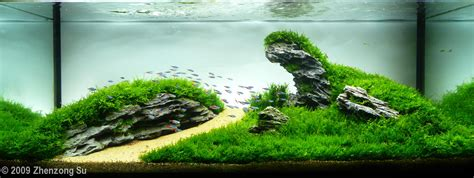 how to aquascape 2009 aga aquascaping contest 27