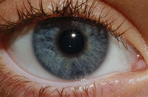 Imagenes Ojos Humanos   fisiologia del ojo humano