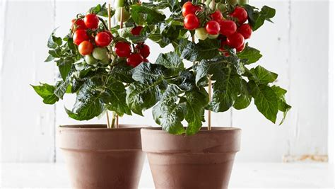 12 plants you can grow indoors this winter ecotek green