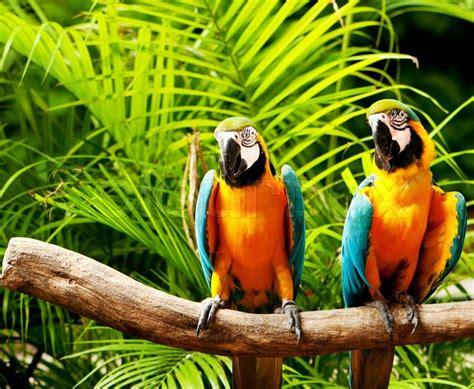 Wall Murals Amazon bunte papageien vogel sitzt auf der stange stockfoto