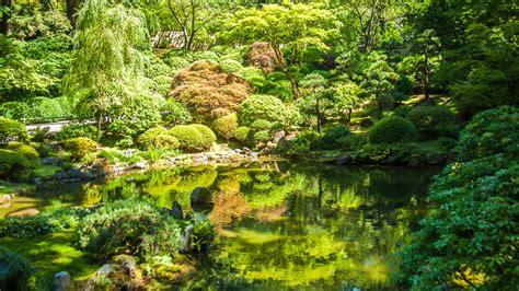 imagenes unicas de la naturaleza m 250 sica relajante de la naturaleza con sonidos de agua