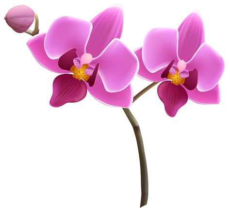 orchideen gestell violet clipart orchid pencil and in color violet clipart