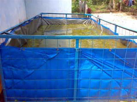 Bibit Lele Gorontalo budidaya ikan lele kolam terpal lahan sempit bibitikan net