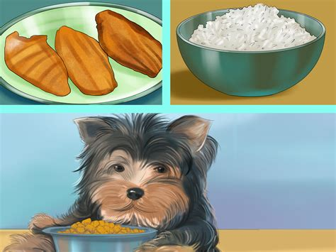 spot signs  pancreatitis  dogs  steps  pictures