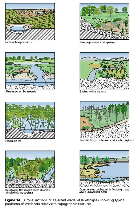 Which Feature Is Characteristic Of A Bottomland Hardwood Forest - loss of wetlands in the southwestern united states