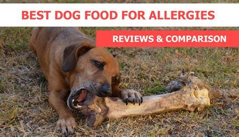 dogs for with allergies best food for allergies reviews recommendations crittersitca