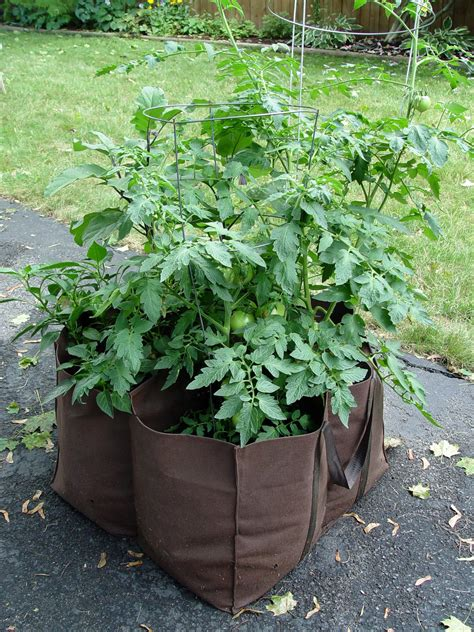 Grow Bag Gardening by Veggie Gardening Without The Garden Garden Housecalls
