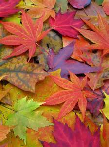 autumn color image gallery a rainbow of fall leaves colors of autumn