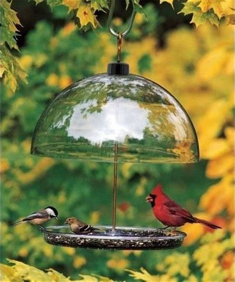 How To Attract Cardinals To Your Feeder how to attract cardinals to your feeder ebay