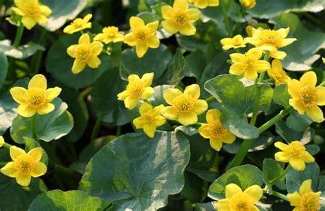 aquascapes unlimited wholesale native wetland plants