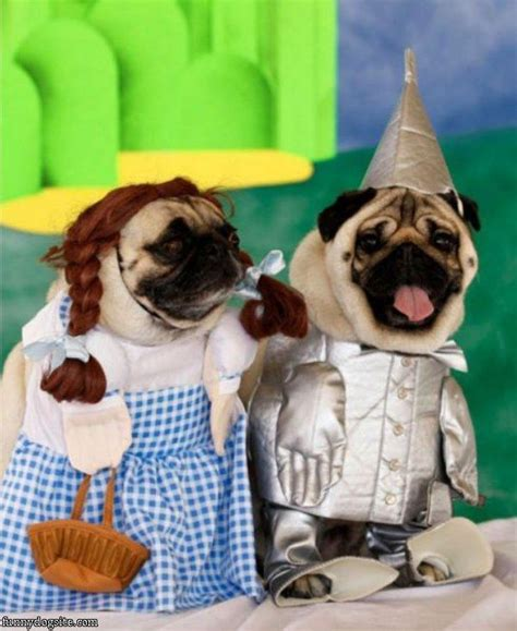 the caign pugs names 1000 ideas about pugs in costume on pug photos pug and pugs
