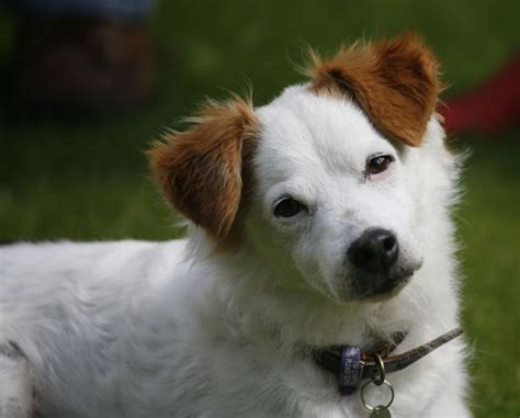 how do dogs think new research offers insight about how dogs think woof report the best email