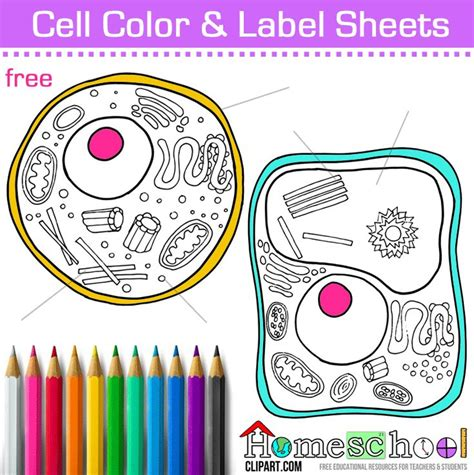 free cell coloring page animal plant cell color and