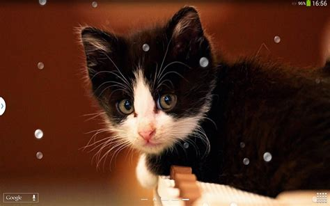 google images cats cute cats live wallpaper android apps on google play