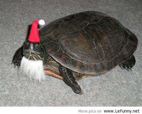 funny turtle funny pictures funny quotes funny jokes  images pics funny