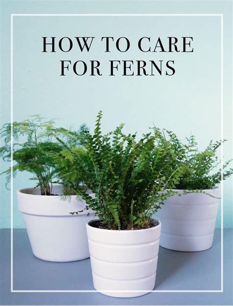 boston fern low light 25 best ideas about indoor ferns on indoor
