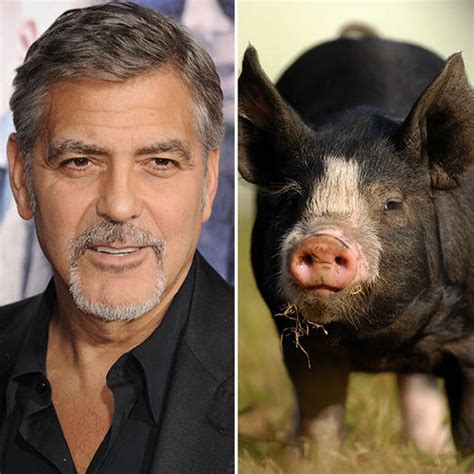 George Clooney Mourns His Dead Pig by Lions Tigers And Bears Oh My 16 Pets