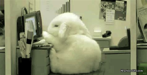 On Desk Gif by Rabbit Falls Asleep Hilariousgifs