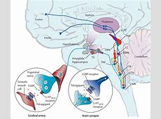 CGRP-receptor antagonism in migraine treatment - The Lancet Lancet Neurology