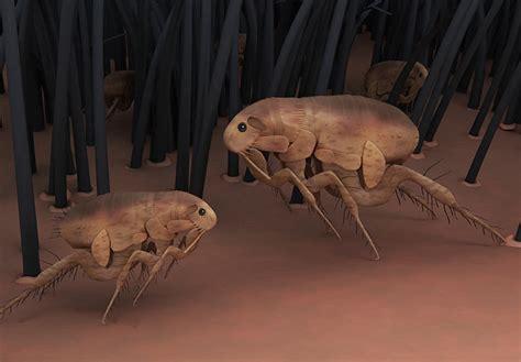 toxic flea  tick control  dogs dogs