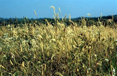 plants in the tropical grassland plant temperate grassland tours
