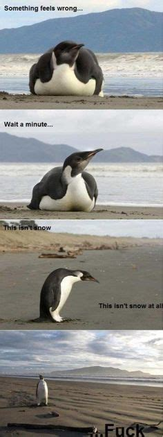 Meme Penguin - 1000 images about penguin memes on pinterest penguin
