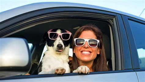 traveling with puppy 15 clever tips for traveling with dogs in cars