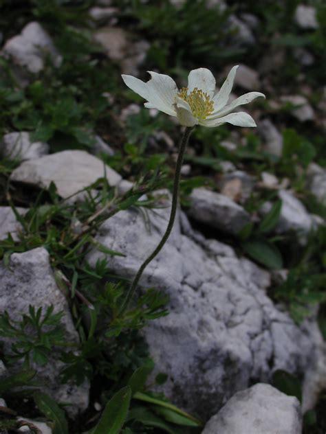 fiori baldo fiori unione baldo