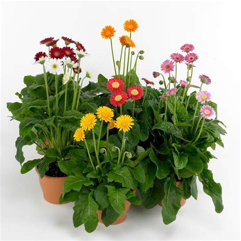 indoor flowering plants no sunlight houseplants that need little light interior design ideas