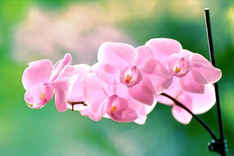 orchid color meaning orchid flower colour meanings flowers healthy