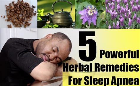 5 powerful herbal remedies for sleep apnea herbal
