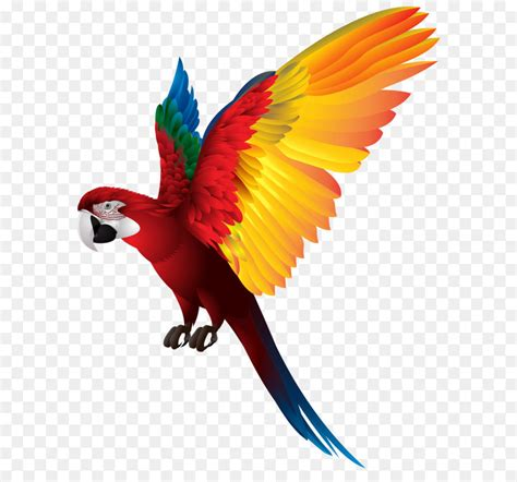 clipart png breasted pygmy parrot bird clip parrot png