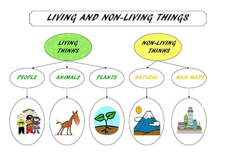 living and non living things the wickford infant school
