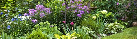 gartenpflanzen pflegeleicht gartenpflanzen informationen zu den beliebtesten pflanzen